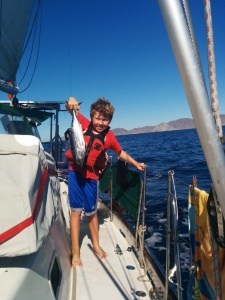 En route to Cabo San Lucas, skipjack tuna